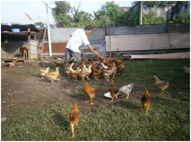 Open range poultry farm that rears about 300 birds at a time