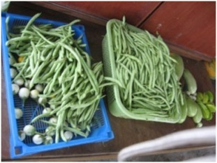 Days harvest of organic vegetables